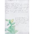 Beanstalk story and adjectives (Charlotte).png