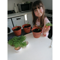 Charlotte (Hedgehogs) has been busy growing cress and beans.jpg
