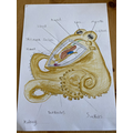 Mason's labelled drawing of an octopus (with a little help from mum on some tricky bits.)(Willow).png