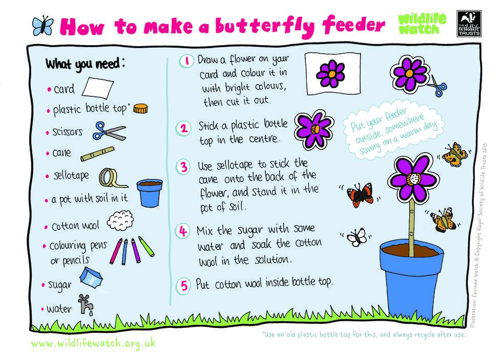 Encourage butterflies in to your garden