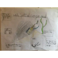 Conger Eel Home Learning from Thomas In Beech Class.jpg