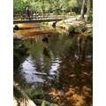 Jared (Badgers) exploring a river habitat .jpeg