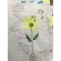 Ella's annotated drawing of a flower (Willows).jpeg