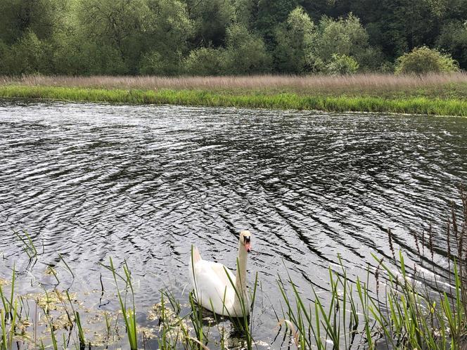 White Swan - Ava W. Robin class