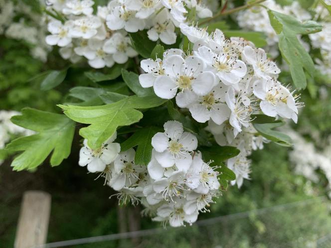 Tree Blossom by Abbie L. Fox Class