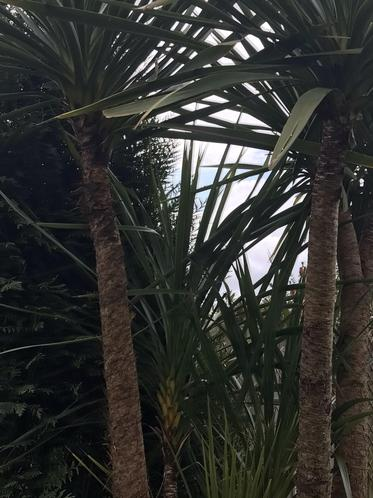 A tropical view by Ruby M. Badger Class