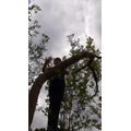 Riley's talent for climbing trees!