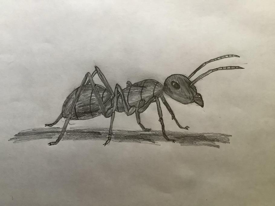 Arthur - ant