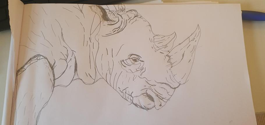 Charles  - Rhino drawing