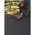 Jake - Feeding the chickens!