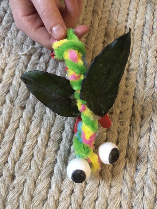 Sadie - dragonfly