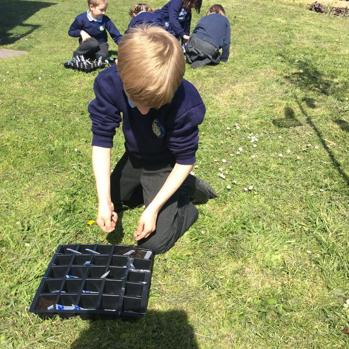 Preparing the compost and trays.