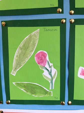 Here are our botanical paintings