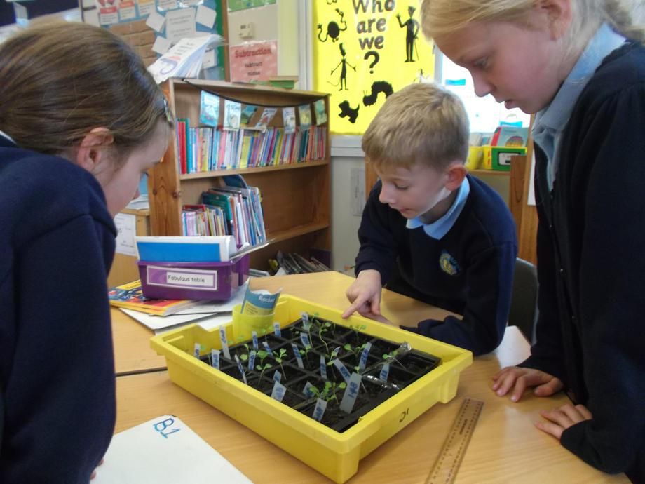 Counting the plants in each tray