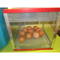 Day 1- We took delivery of 10 eggs.