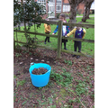 Planting sunflowers by the school pond