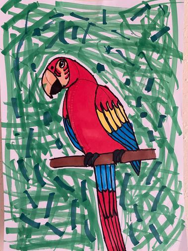 Bexley drew a fabulous toucan and then followed instructions to draw a macaw