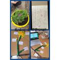 Fantastic models of Plants!