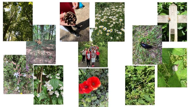 Our wonderful walk at Daneshill Nature Reserve