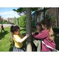 How do you measure a tree?