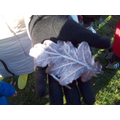 We found frozen leaves