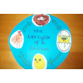 The Life Cycle of a Chicken - Art Room Activity