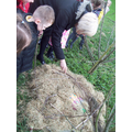 Miss Morgan moved the hay