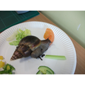 Snail B (Banana) was interested in the tomato
