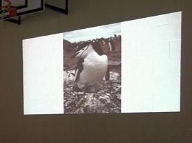 Petey, the Chinstrap penguin.