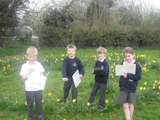 Daffodil maze