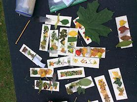 Some leafy bookmarks.