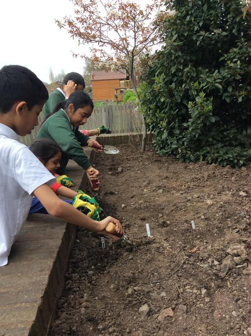 Wild seed planting with children across the school
