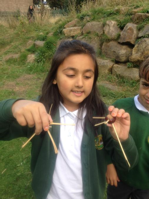 Conker bugs using a hand drill