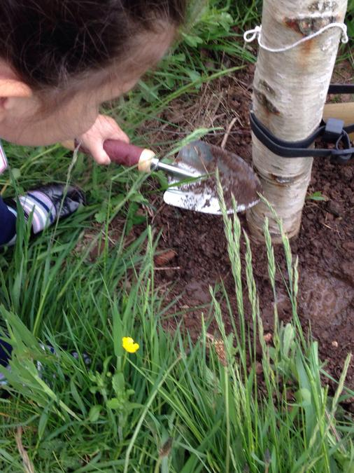 Planting wild flowers for insects