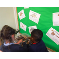 Class 1 sorting dinosaurs!