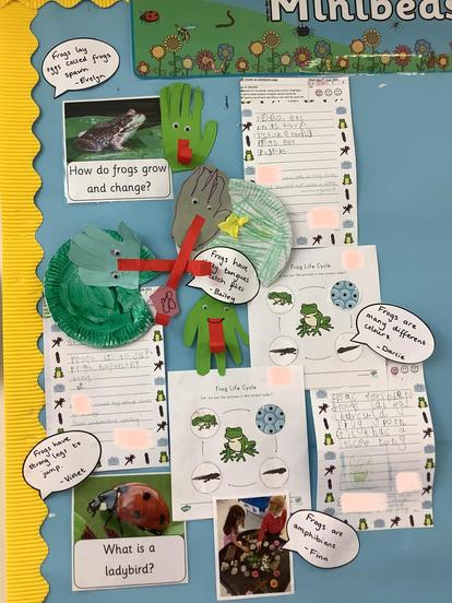 Our minibeast learning wall