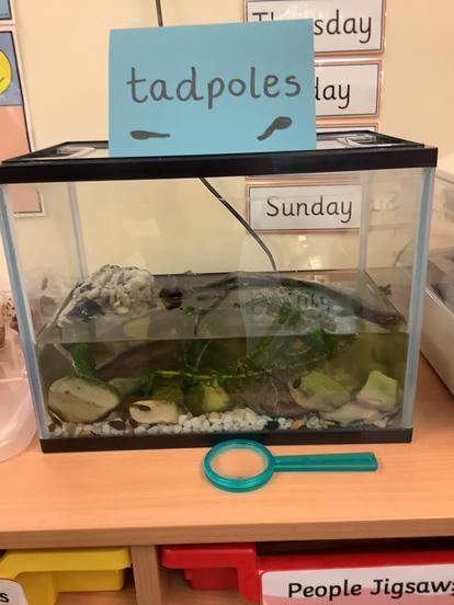 Our tadpoles