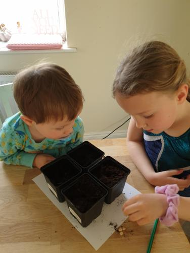 We planted a pea seed into each pot.