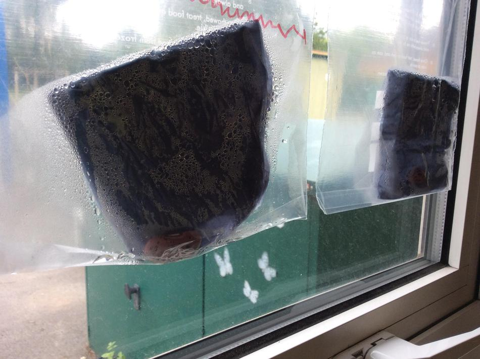 He sent us our own beans so we are growing them in our window!