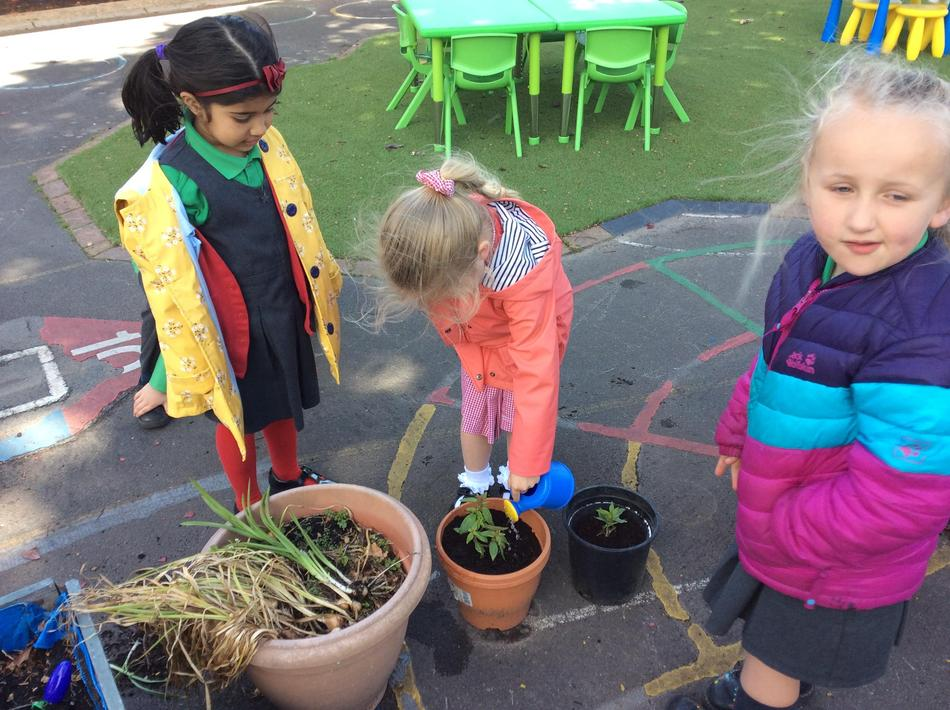 Exciting times planting up new flowers in our gardening area!
