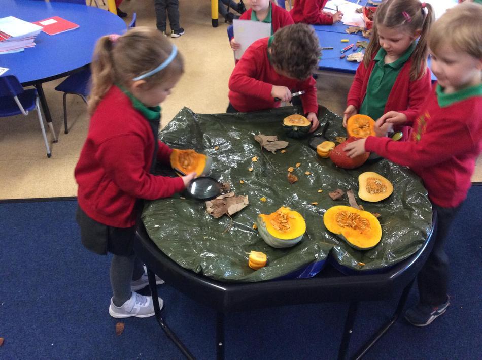 Exploring pumpkin and seasonal squashes