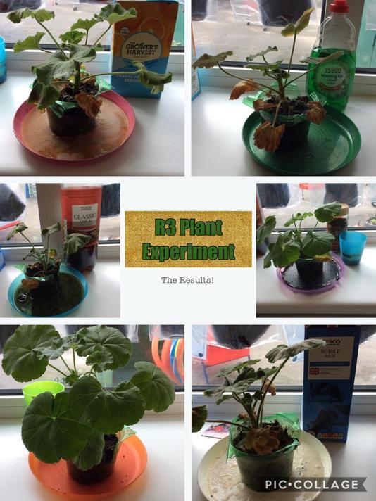 Our plants aren't looking too happy!
