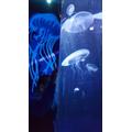 Gazing at the jellyfish