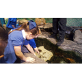Getting to know the creatures in the rockpool!