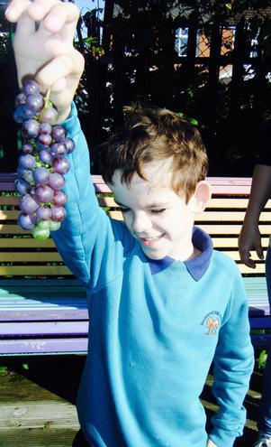 More Grapes!