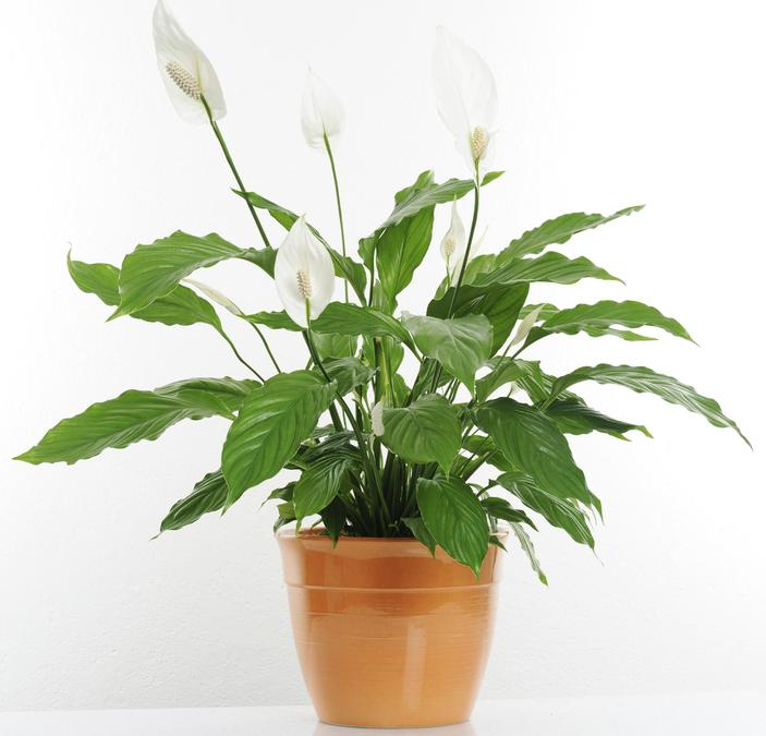 What helps a plant to be healthy?