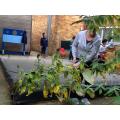 Week 1- Year 4 gardening project 2017-2018
