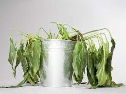 What causes a plant to be unhealthy?