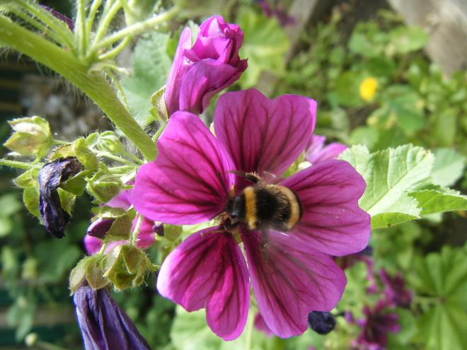 Bees enjoying our nectar bar