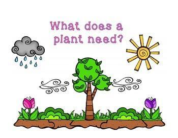 What do plants need?  How is this similar to humans?
